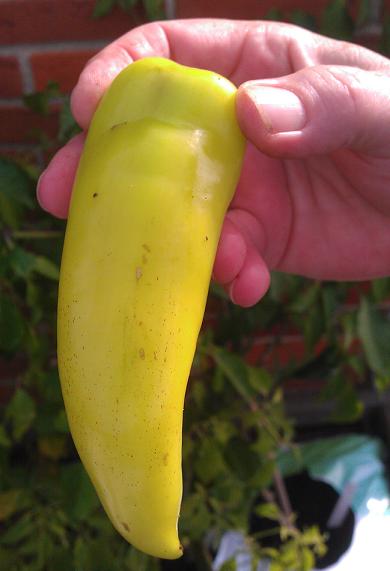 Hot Banana